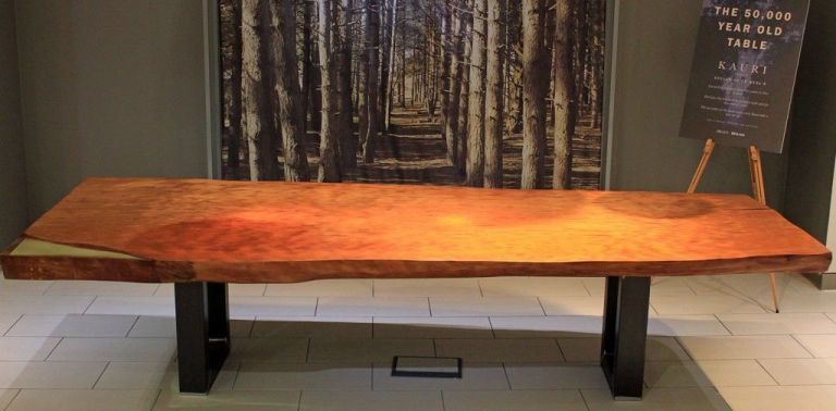 This amazing table is made from the oldest wood on the planet