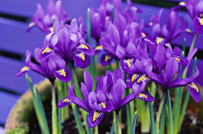 Best Winter Flowers For Colour Indoor And Outdoor Garden