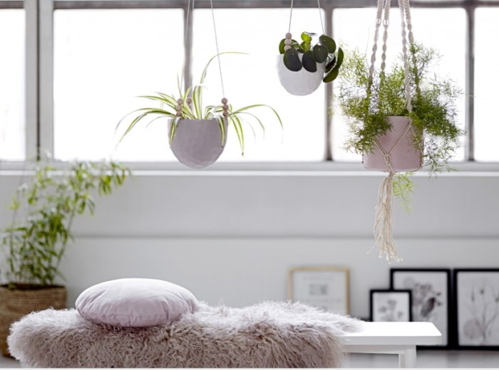 7 Indoor Hanging Planters