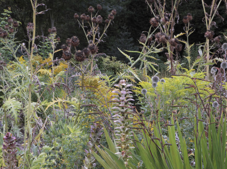 cottage-garden-seedheads
