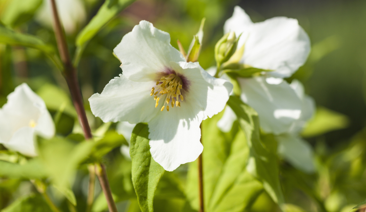 8 Of The Most Fragrant Flowers For Your Garden