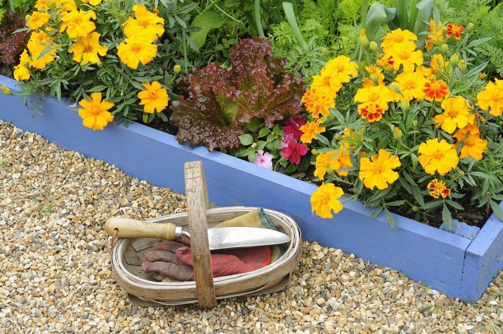 kitchen-garden-companion-planting