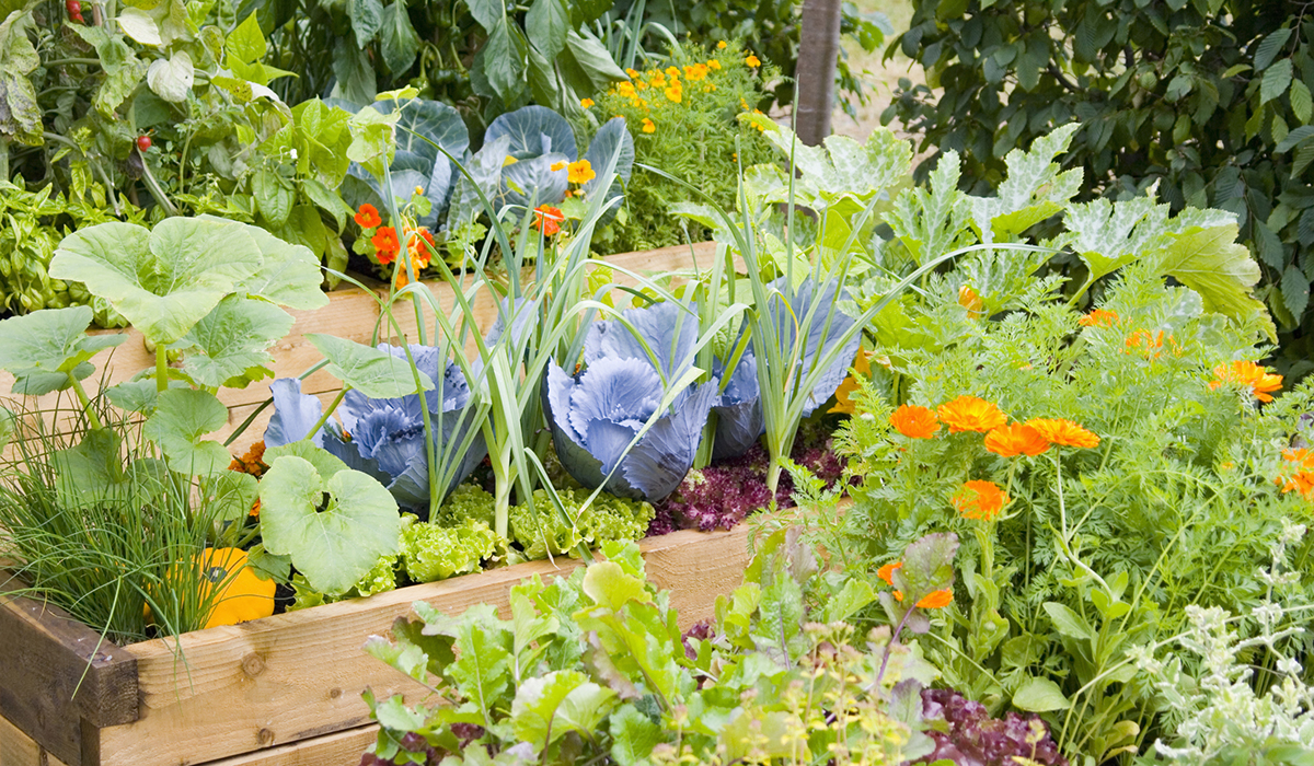 How to create a kitchen garden for Creating a vegetable garden