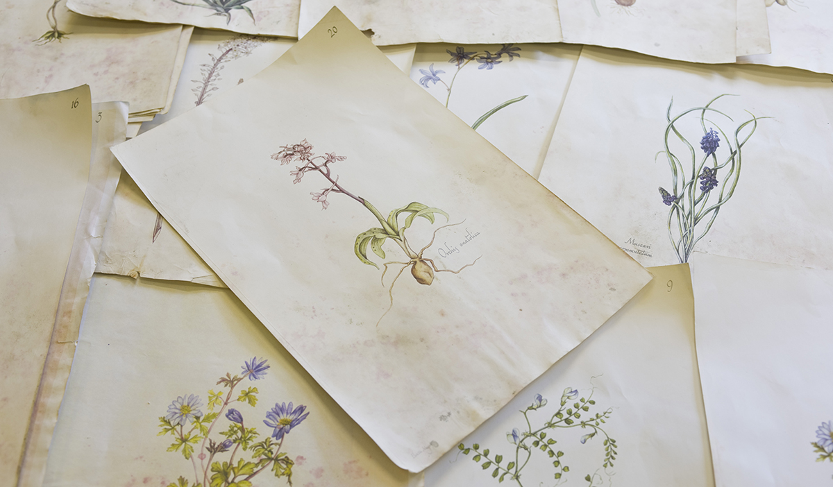 antique-drawings