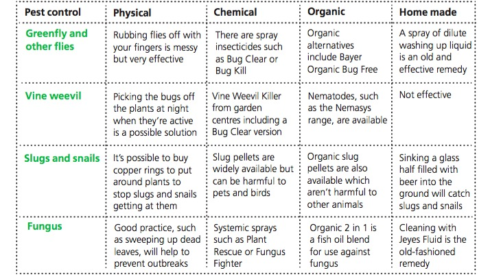 pests-and-diseases-treatment