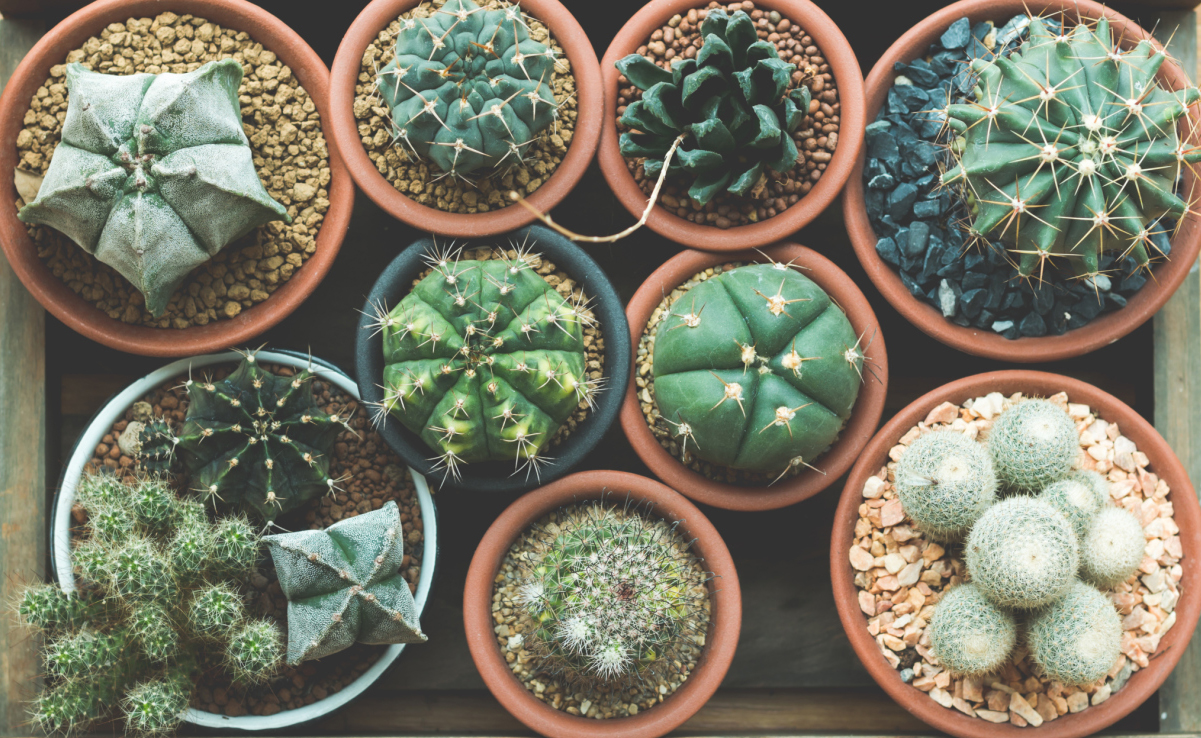 How To Grow Succulents Indoors And Out Simplestyler