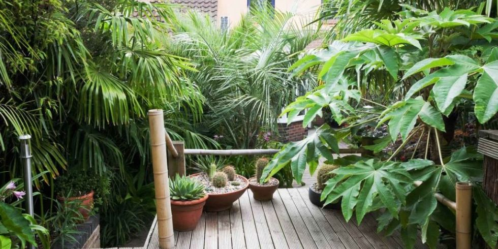 Tropical Garden Ideas Uk 10 tropical plants you can grow in the uk