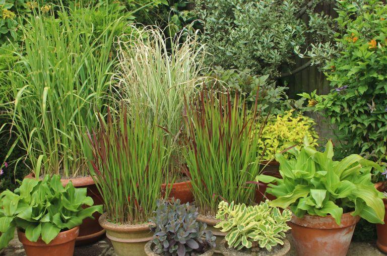 Best Ornamental Grasses For Your Garden