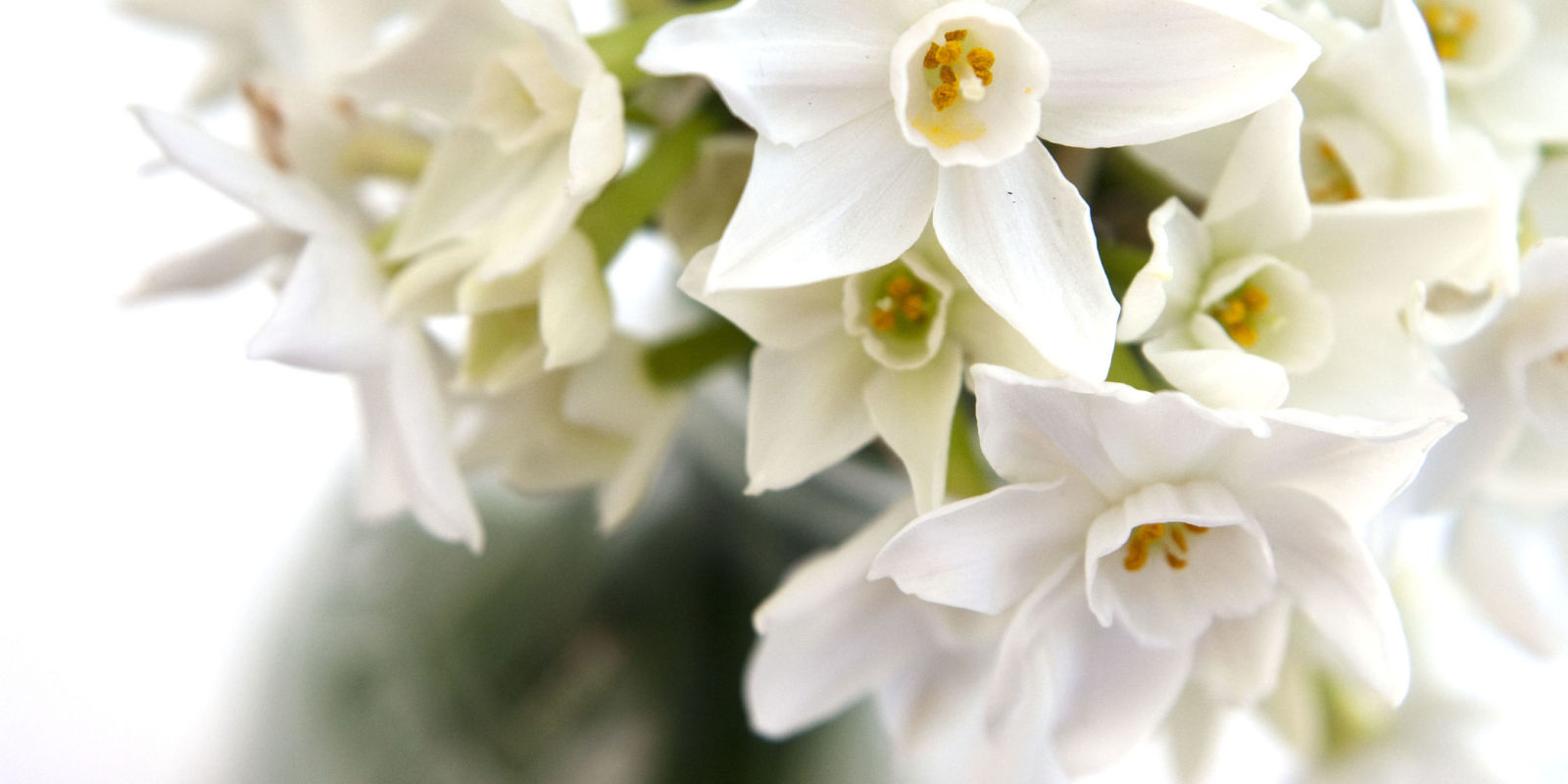Plant Indoor Bulbs For Flowers At Christmas