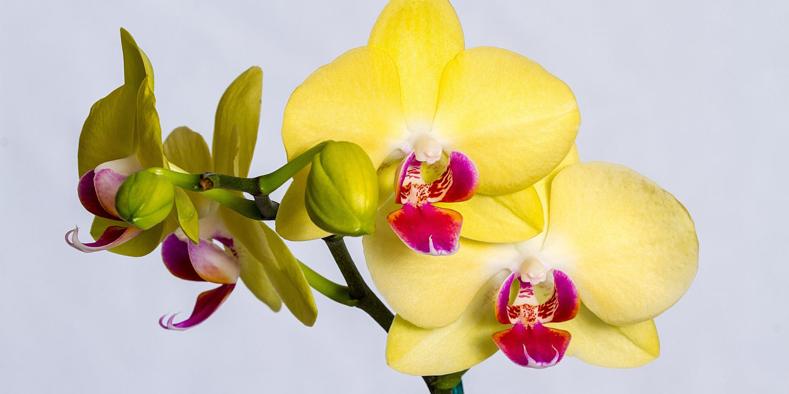 6 Things To Look Out For When Buying Orchids