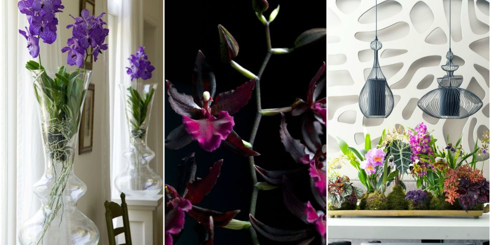 Orchids - trends for winter gallery
