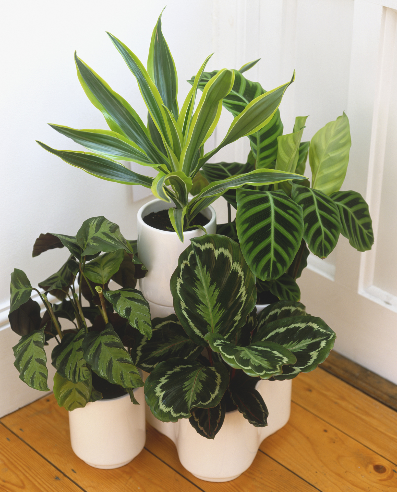 How to care for houseplants in winter House beautiful com kitchens