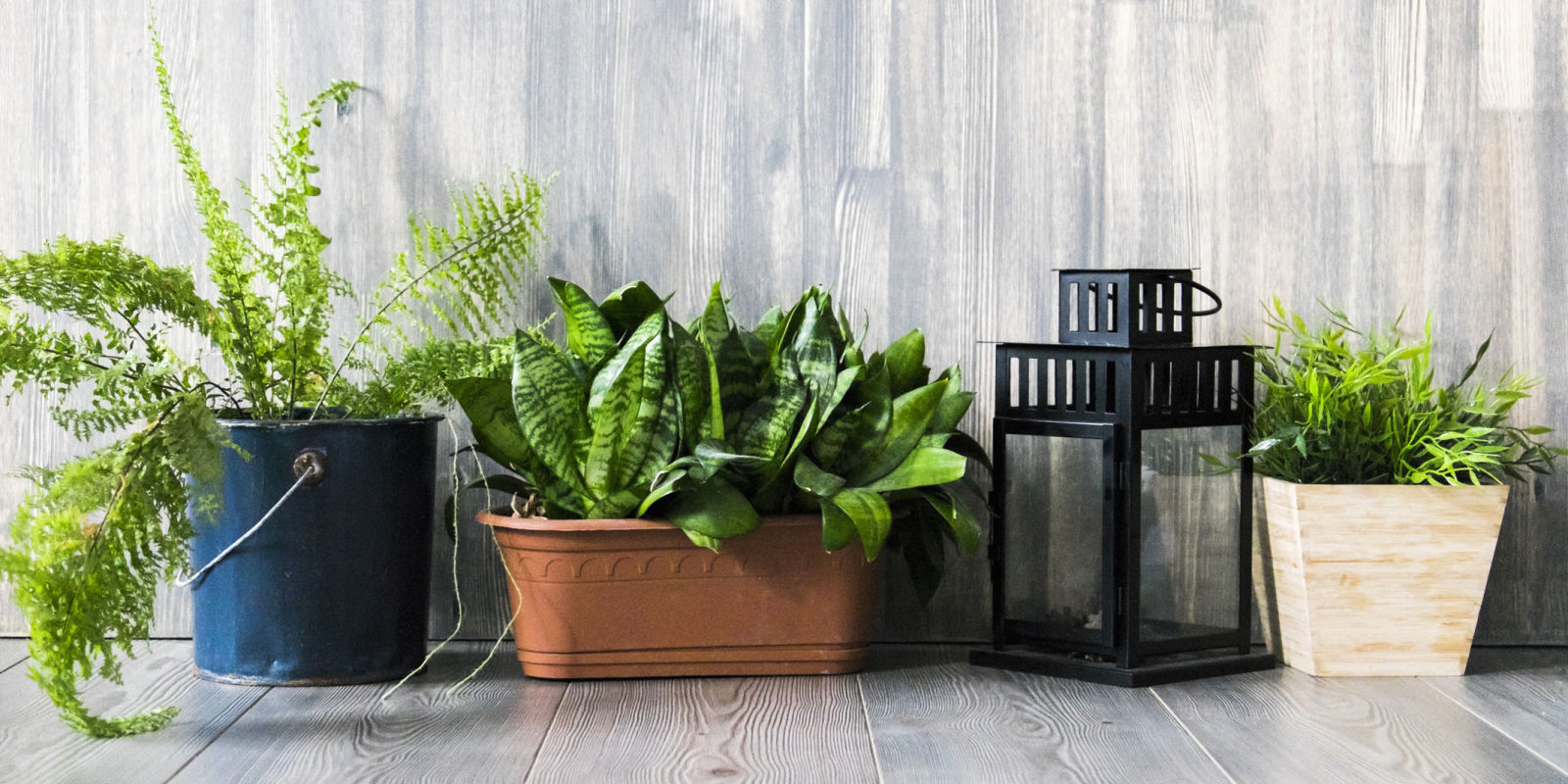 How do you bring the outside in follow this one trick to nail the trend - Beautiful house plants ...