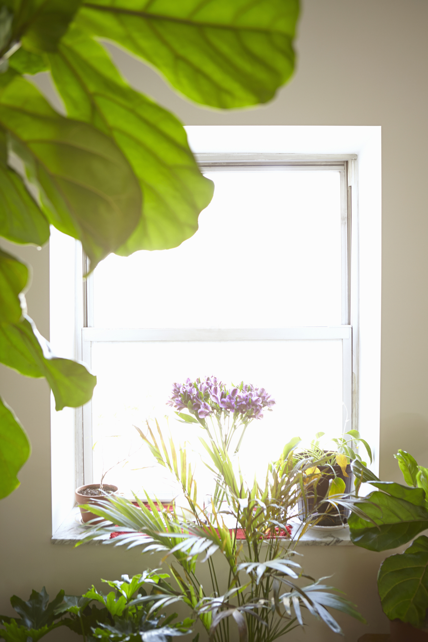 This Is The Ultimate House Plant Cheat Sheet