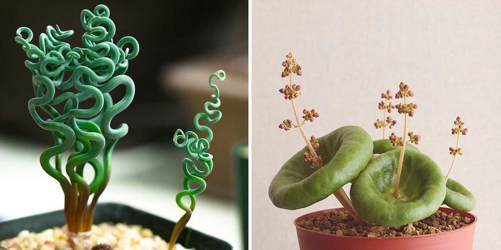 10 weird and wonderful houseplants you never knew existed