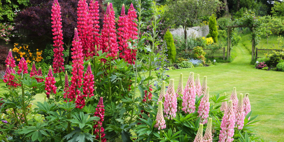 this infographic shows the top gardening hotspots in the uk