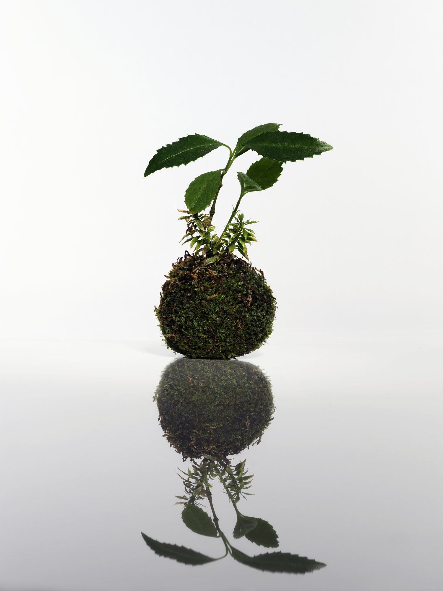 How to make a kokedama it 39 s an indoor gardening trend for Indoor gardening trends