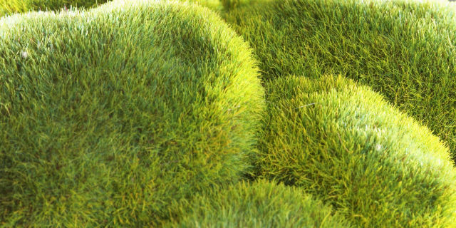 Fake moss. How to choose the perfect freestanding bath