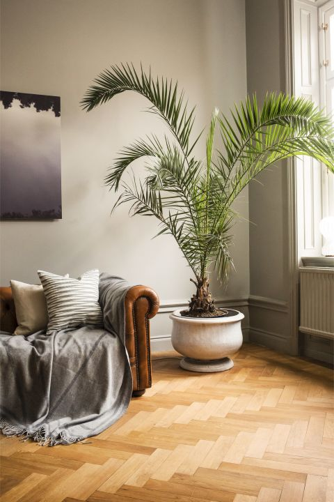 Lagom design and styling tips 16 best ways to embrace for Palm tree living room ideas