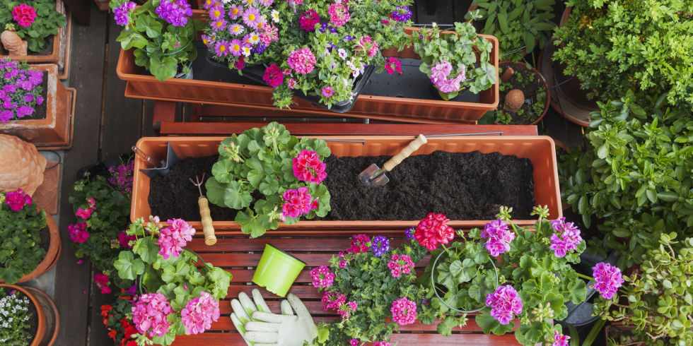 Garden Design With Plant A Hanging Basket For Summer Landscaping Ideas And House