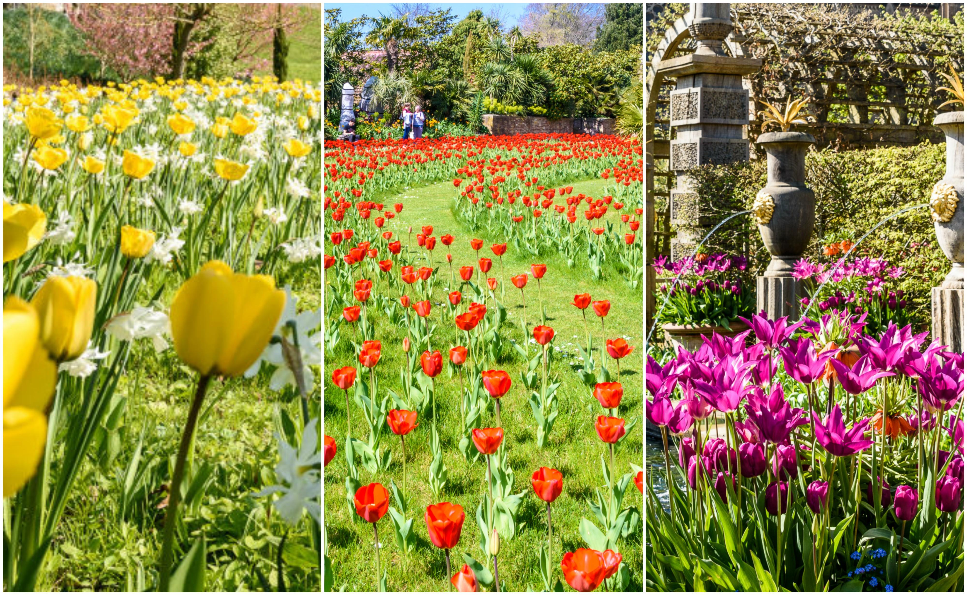 arundel castle 39 s annual tulip festival 2017 is simply
