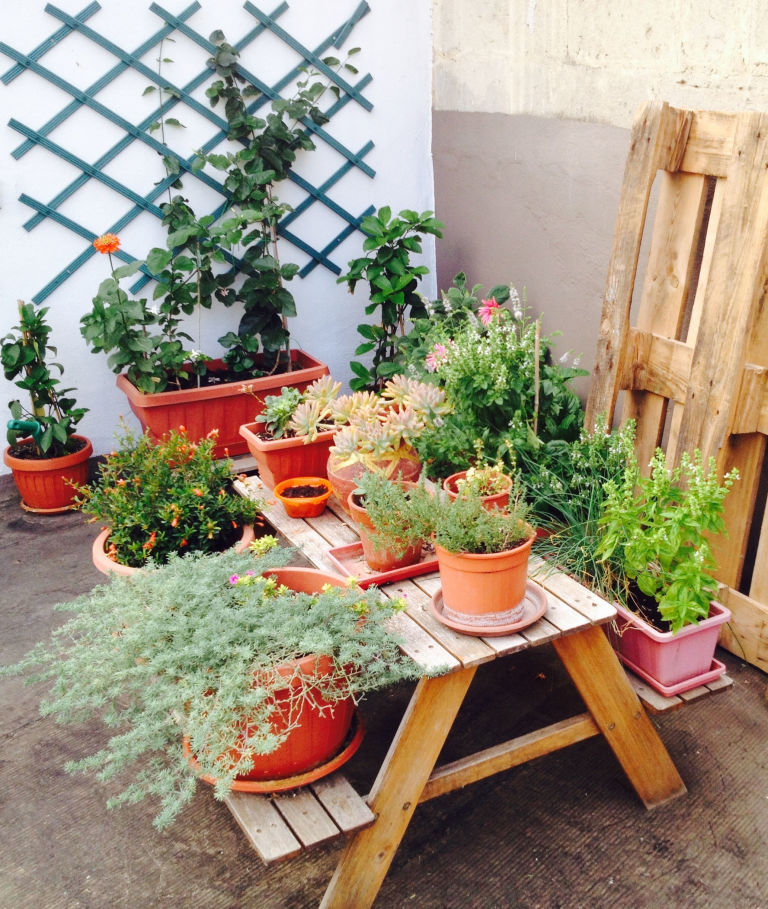 Potted Plants On Wooden Table