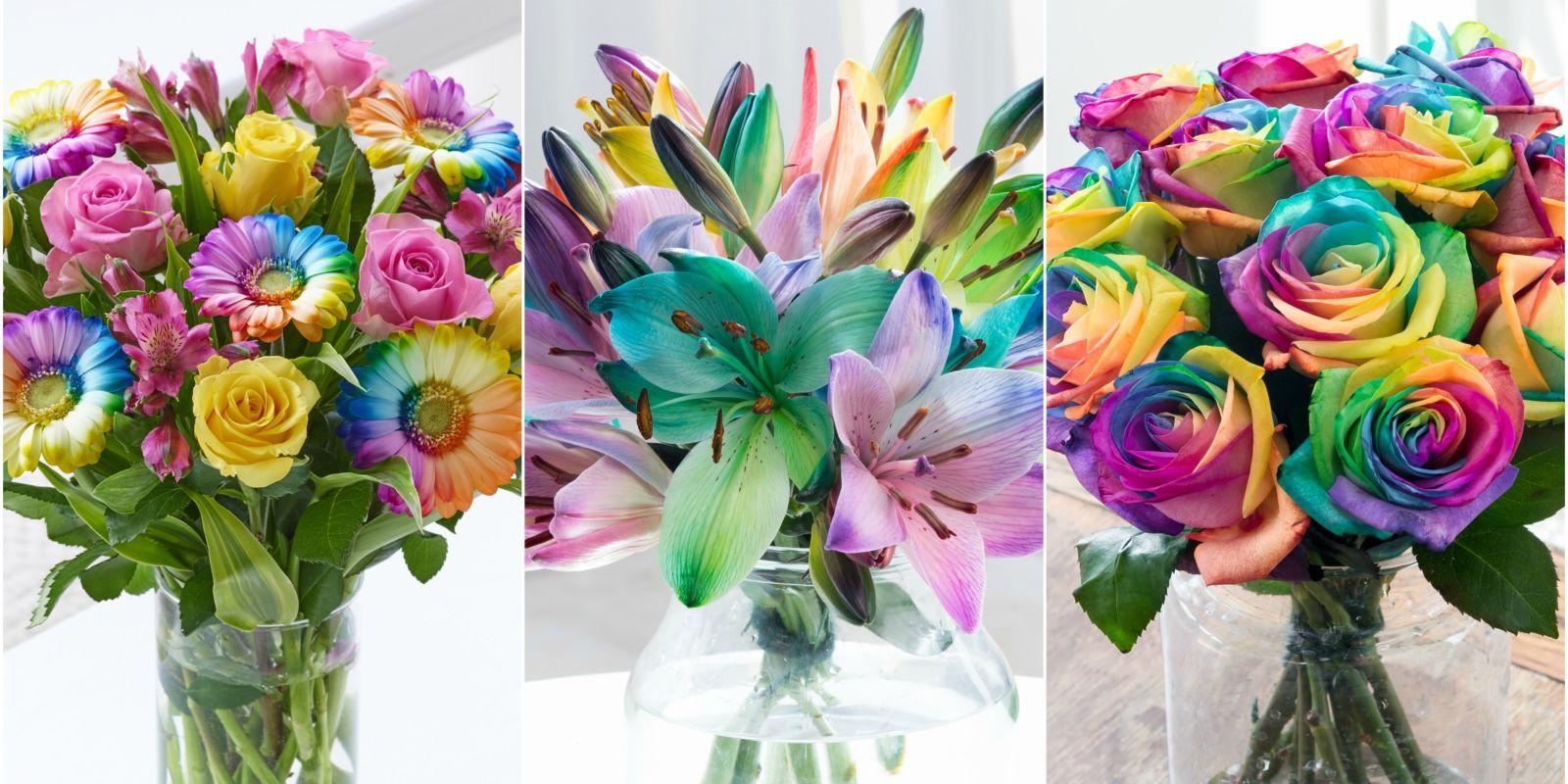 Rainbow Flowers 6 Multicoloured Blooms
