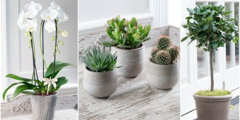 How to grow succulents indoors and out - Beautiful house plants ...