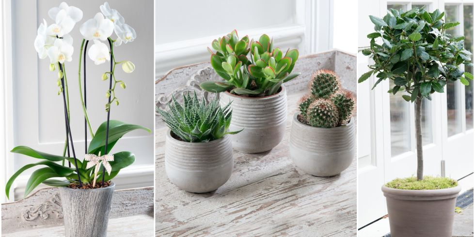 Stylish potted plants from the House Beautiful collection at ...