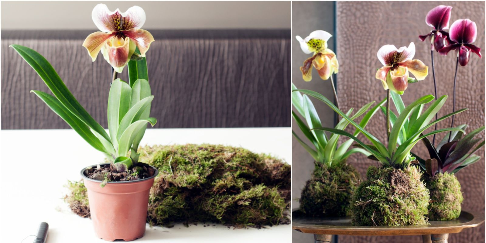 Orchid kokedamas an elegant twist on 2017 39 s indoor for Indoor gardening trends