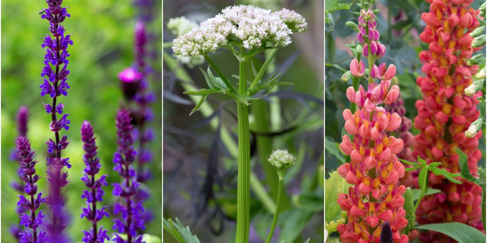 6 of the most popular plant trends for 2017 - Garden Design Trends 2017