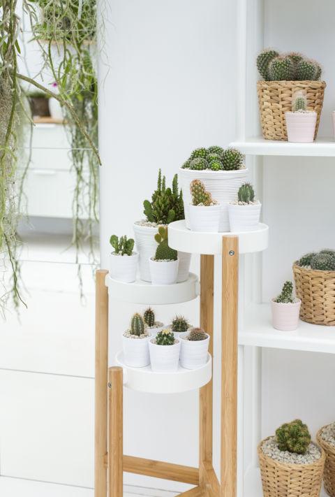 5 easy indoor garden ideas small space ideas for Indoor garden design uk