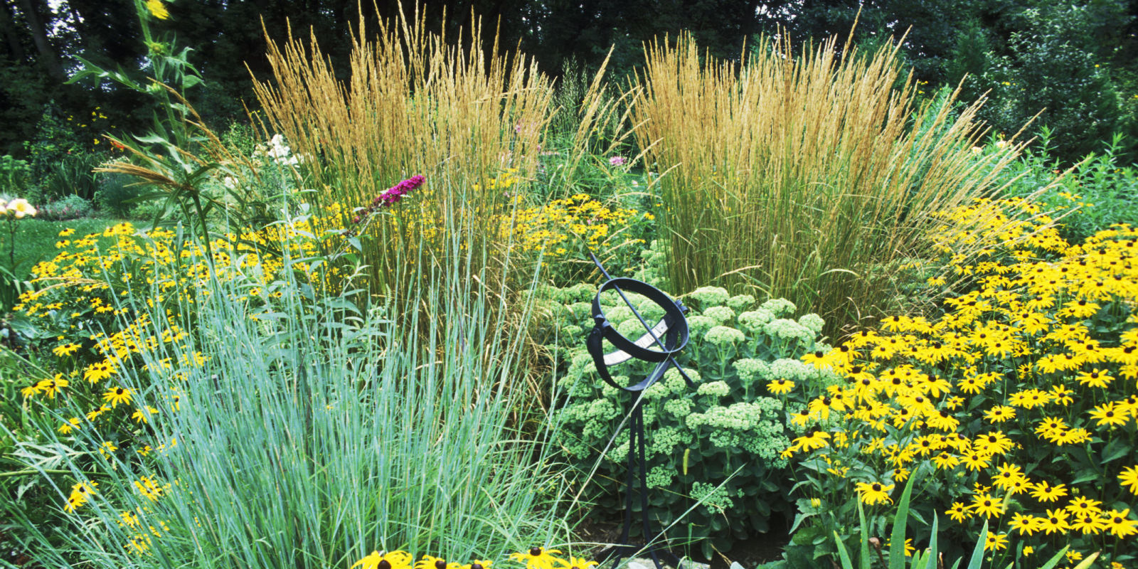 Best ornamental grasses for your garden for Best ornamental grasses for landscaping