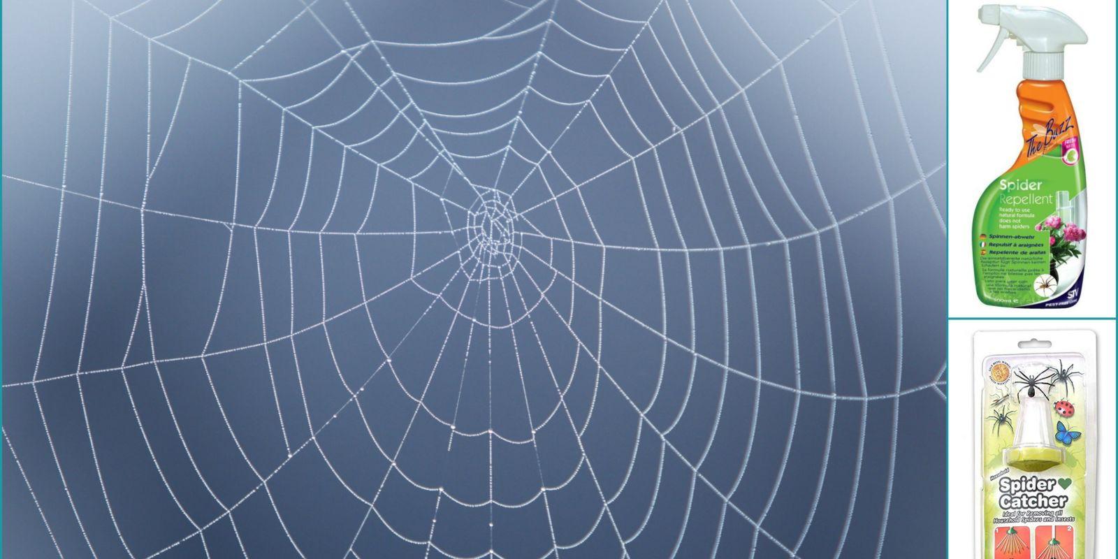 Best Spider Repellents These Natural Spider Deterrents