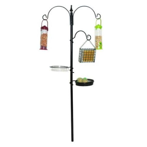Why You Should Set Up A Bird Feeding Station In The Garden