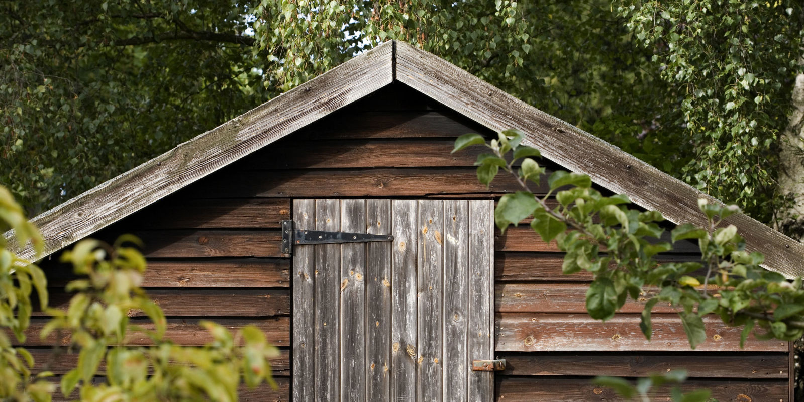 Garden Shed   Front On View Of English Garden Shed Surrounded By Trees