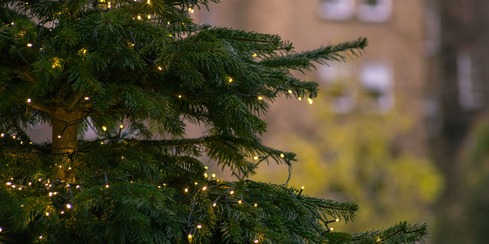 The dos and donts of using outdoor christmas lights outside close up of illuminated christmas tree aloadofball Images