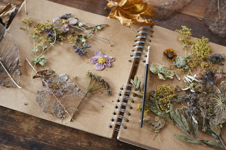 Dried flowers and herbs on notebook