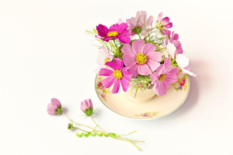 Pretty pink flowers in a teacup